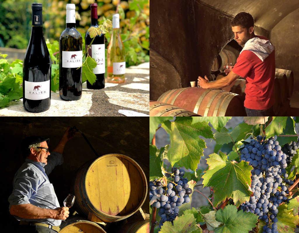 Activités viticoles domaine de Saliès